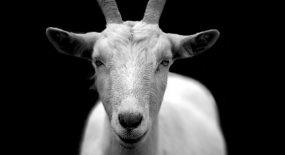 Ekonomski jarci: zašto nemaju rogove i kako se koriste protiv konkurenata